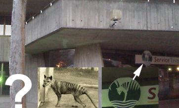 Ghost of the Thylacine in Launceston