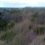The high dunes protect the town from the wind sweeping from the bay.. good view from the top!